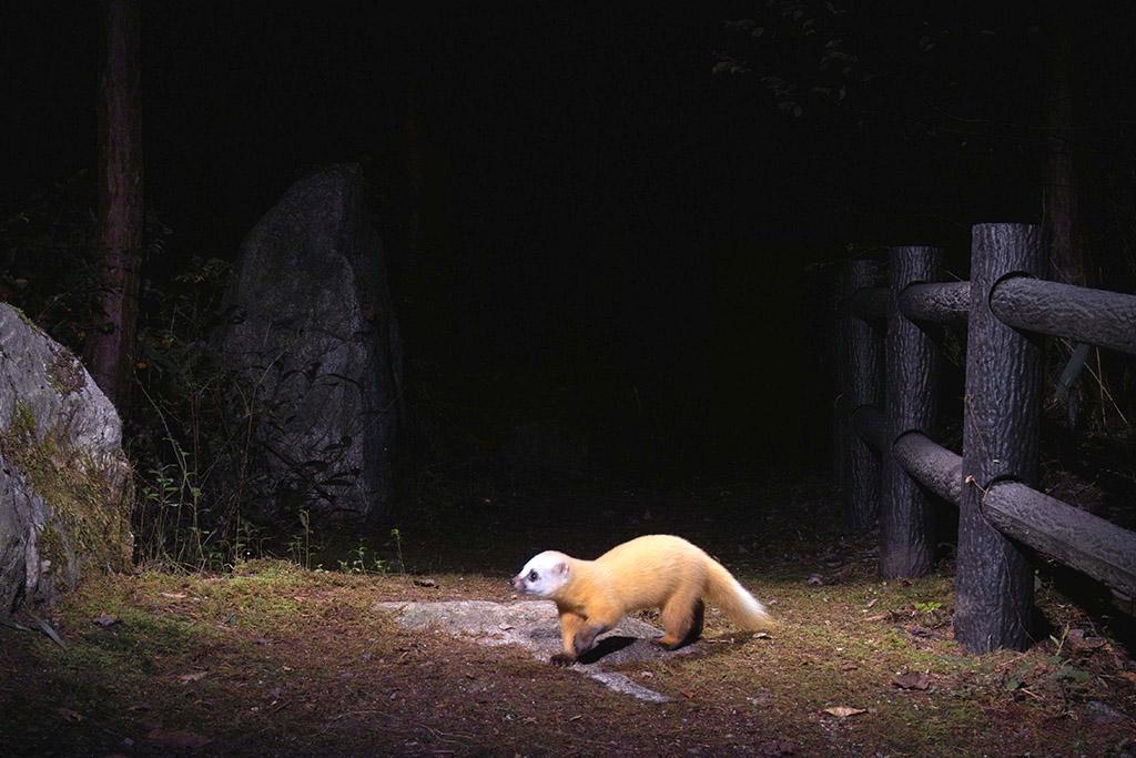 "Manabu Miyazaki ""Animal Trail, Nagano (Japan)"" 2005-2008 © Manabu Miyazaki"